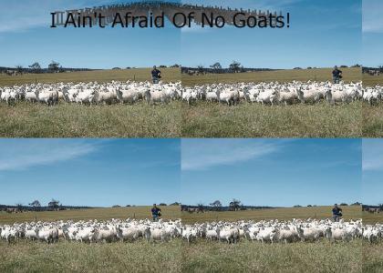 Afraid of Goats?