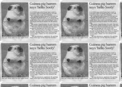Epic Guinea Pig Maneuver