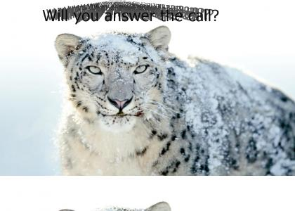 The Snow Leopard is calling