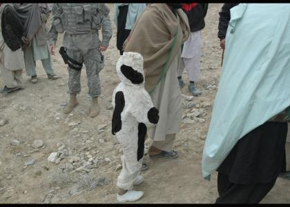 Afghan Cowboy