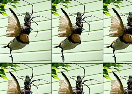 Bird Eats a Spider