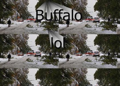 buffalolol