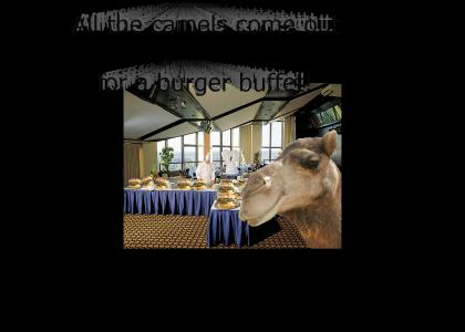 Camels Come to A Buffet!