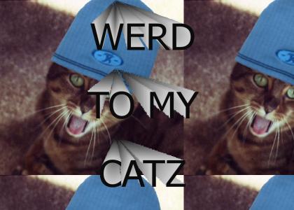 Cat Rap!