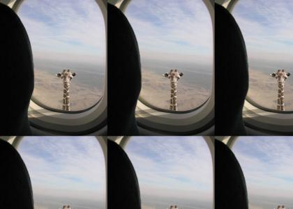 giraffe in the air again!