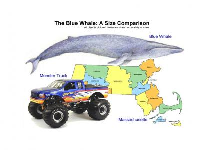 EducateTMND: Big Blue Whales!!!