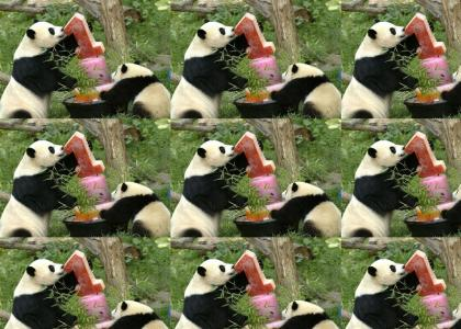 Pandas Love Ice Cream!!!