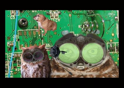 Tech Support Owls hunger...