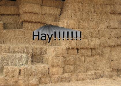 Hay!!!!!
