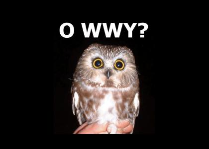 O'rly baby owlets