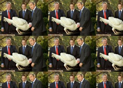 He sure loves turkeys...
