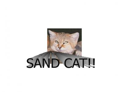 EMANCIPATION OF THE SAND CAT!!!