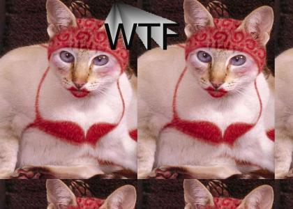 NEDM Bikini Cat