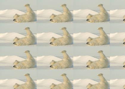 Happy Polar Bear Slideshow
