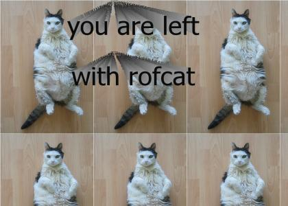 When roflcat stops laughing...