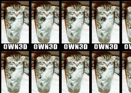 own3d cat
