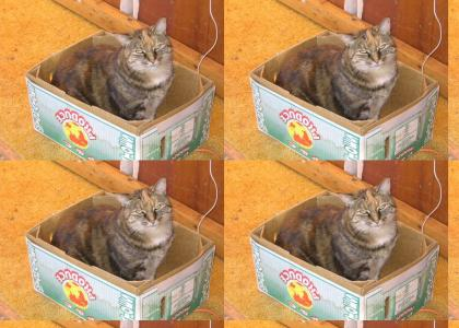 I'm the kitty cat in the box