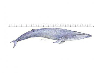 EducationTMND: Blue Whale
