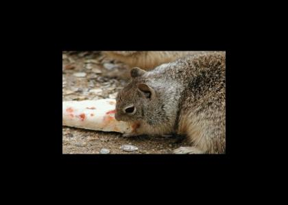 Squirrel Eating Pizza has a glorious vision