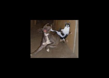 Epic Housecat Maneuver