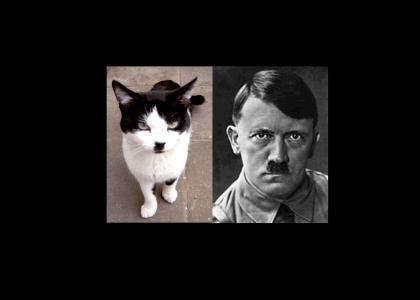 OMG, secret nazi cat !!!!