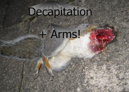 Squirrel Vs Fox =