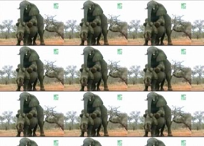 What do you get when you cross an elephant and a rhino?