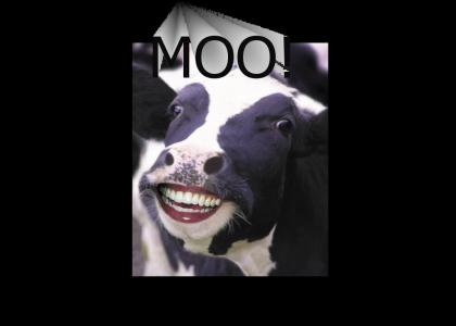 Scary Cow