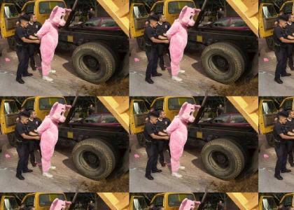 Pig Discrimination