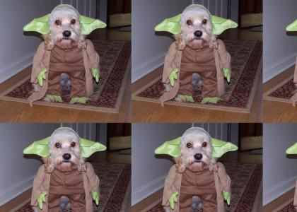 Yoda Dog Now Man