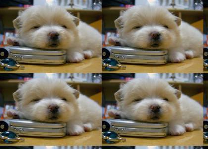 Glenn Beck Screams at Adorable Puppy