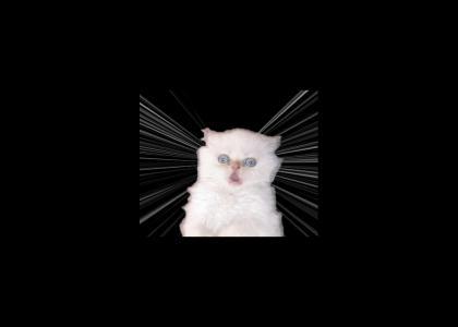 Lightspeed Cat