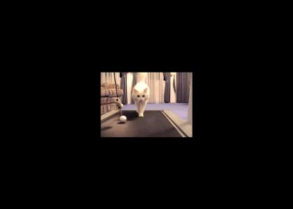Cat On A Treadmill