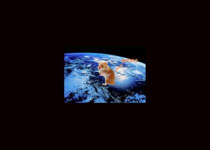 Hamster in space