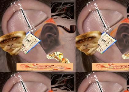 maxillary: infected pus filled