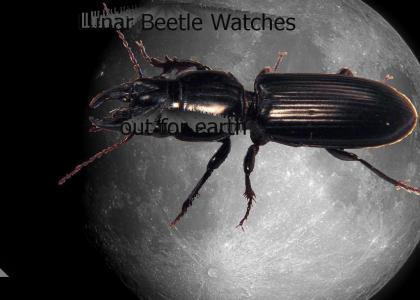 YHTMOAG Lunar Beetle (now 100% more watermark)