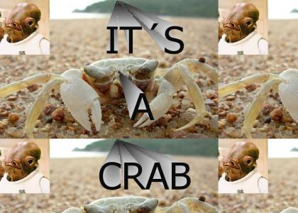 IT'S A CRAB