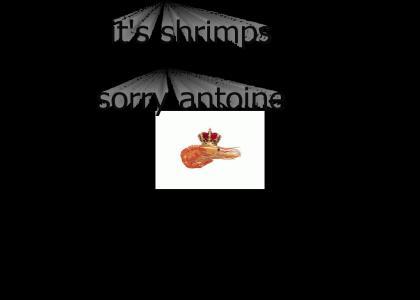 shrimp tuesday