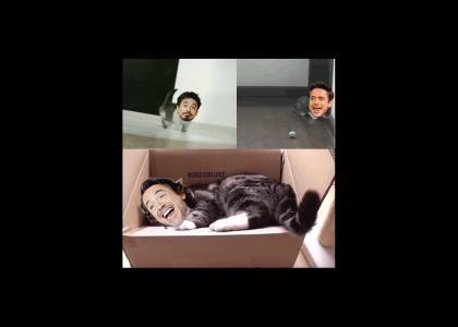 Robert Downey Cat Jr.