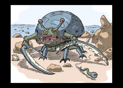 tortoise crab
