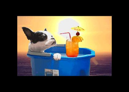 Bucketdog enjoys summer in the mediterranean