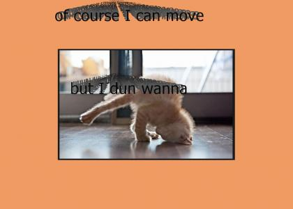Mr. Scruffle's Funnies 'I Can't Move Today Cat'