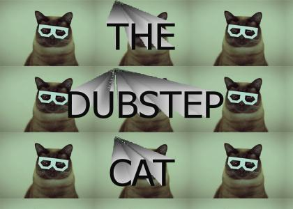 The cat who loves Dubstep