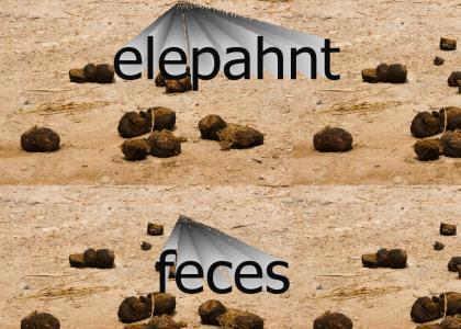 AkiraGT just bought more elephant feces