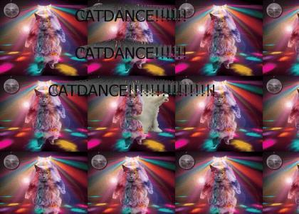 CATDANCE!!!!!!