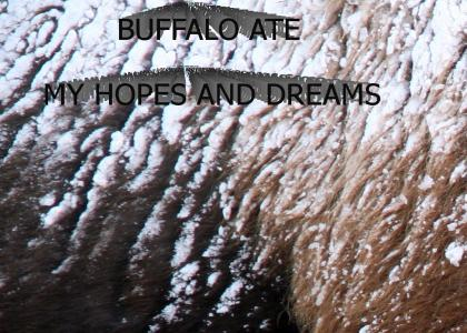 Buffalo Ate My Hopes and Dreams