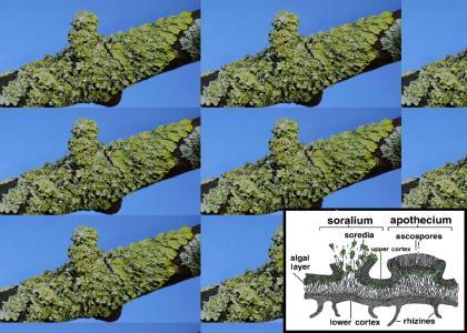 Natural Phenomenon - Lichens