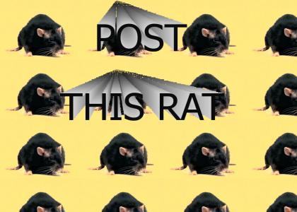 POST THIS RAT