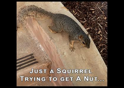 Squirrel Needs a Nut