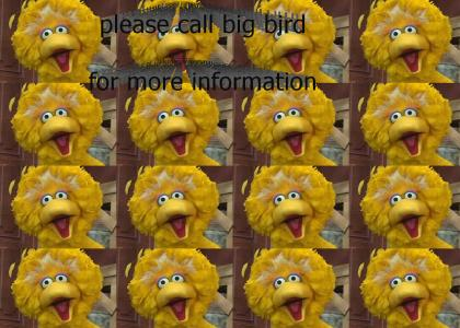 Please Call Big Bird